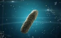 Бактерии. Война миров (05.02.2017) SATRip