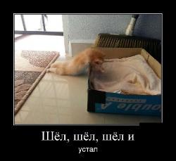 Подборка лучших демотиваторов №291