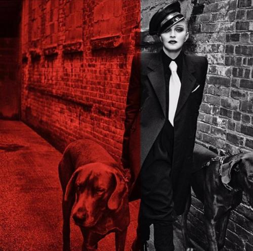 Мадонна рассказала подписчикам о «собачьей жизни»