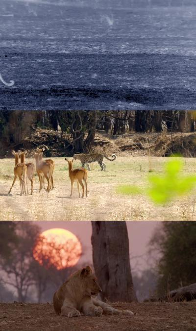 Africas Hunters Series 1 1Of6 The Hungry Leopard 1080P Hdtv X264 Aac