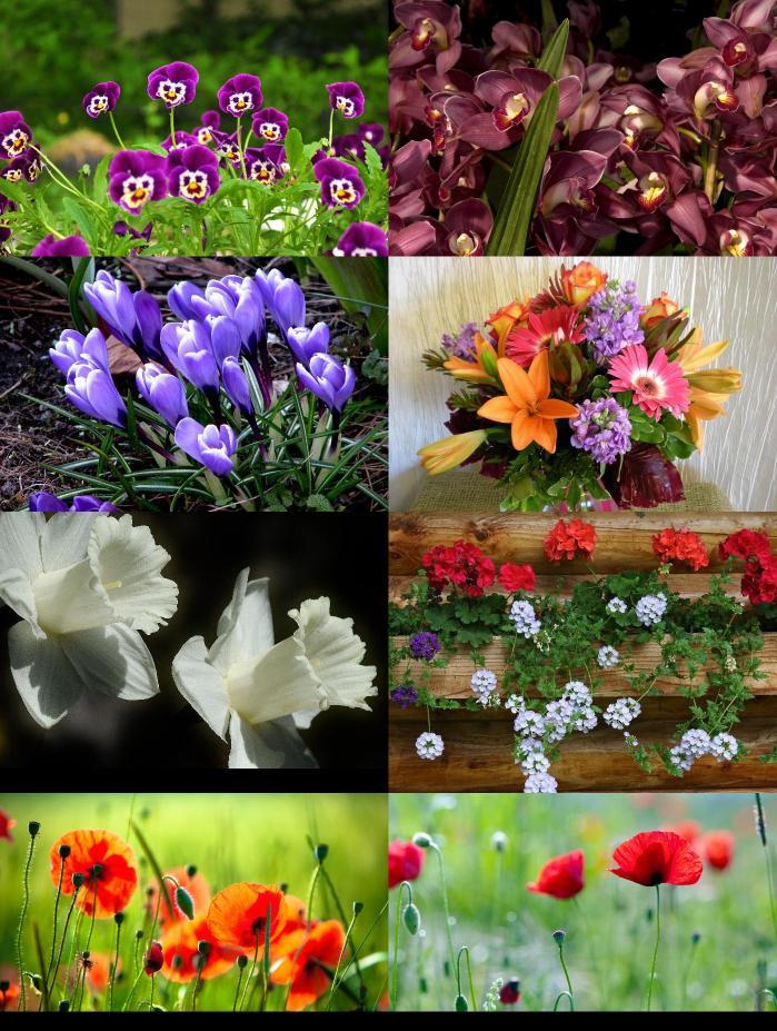 Beautiful Flowers Wallpapers {Pack - 140}