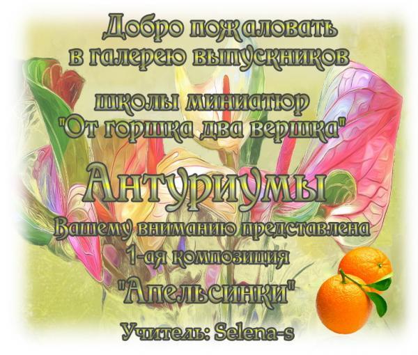 3-ая галерея.Антуриумы.Апельсинки Ca76bd475aa41f5227899f7052733a00